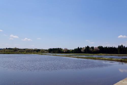 田植え前の風景